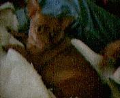 My dog Piglet.